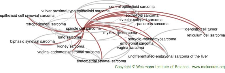 Diseases related to Spindle Cell Sarcoma
