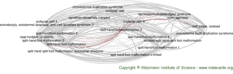 Diseases related to Split-Hand/foot Malformation 2