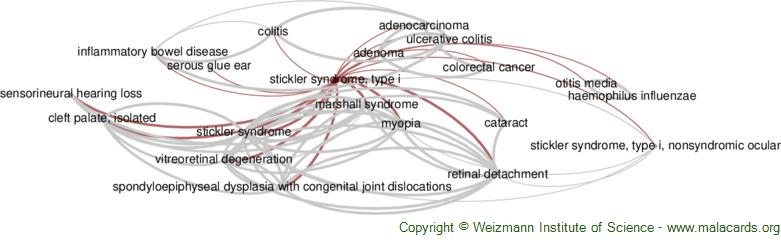 Diseases related to Stickler Syndrome, Type I