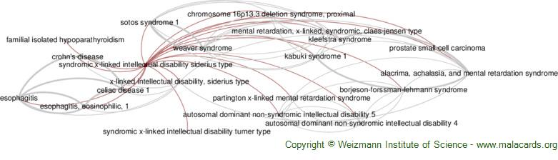 Diseases related to Syndromic X-Linked Intellectual Disability Siderius Type