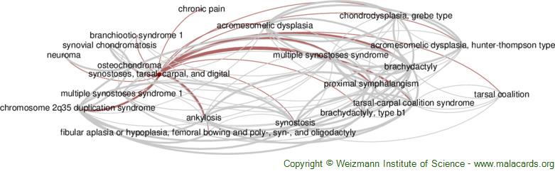 Diseases related to Synostoses, Tarsal, Carpal, and Digital
