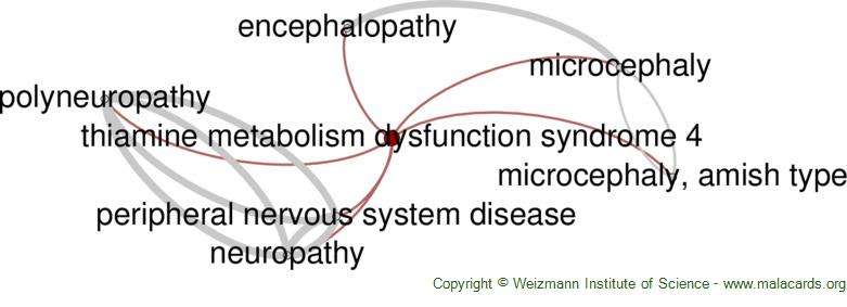 Diseases related to Thiamine Metabolism Dysfunction Syndrome 4