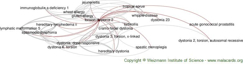 Diseases related to Torsion Dystonia 2