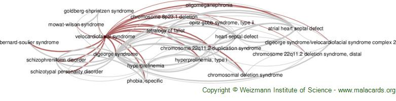 Diseases related to Velocardiofacial Syndrome