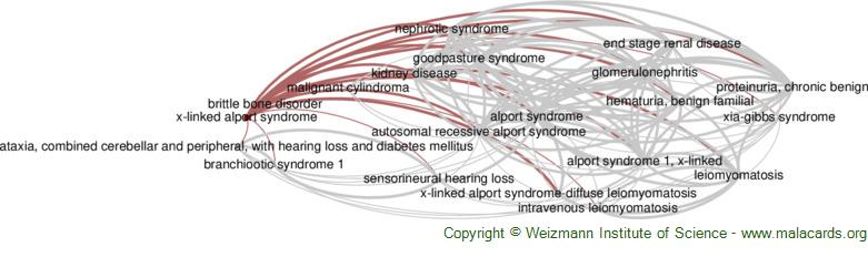 Diseases related to X-Linked Alport Syndrome