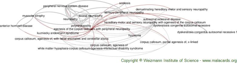 Diseases related to Agenesis of the Corpus Callosum with Peripheral Neuropathy