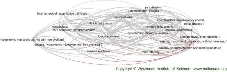 Diseases related to Anemia, Hypochromic Microcytic, with Iron Overload 1