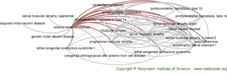 Diseases related to Anterior Horn Cell Disease