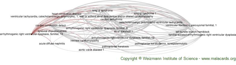Diseases related to Arrhythmogenic Right Ventricular Dysplasia, Familial, 13