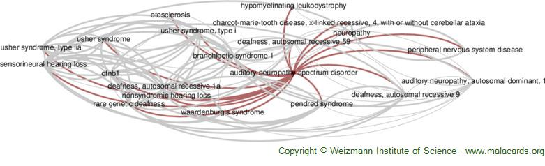 Diseases related to Auditory Neuropathy Spectrum Disorder