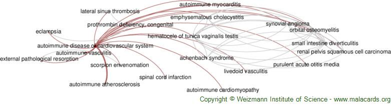 Diseases related to Autoimmune Disease of Cardiovascular System