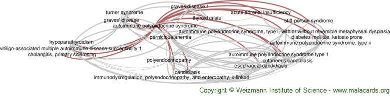 Diseases related to Autoimmune Polyendocrine Syndrome