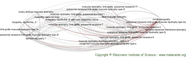 Diseases related to Autosomal Recessive Limb-Girdle Muscular Dystrophy Type 2q