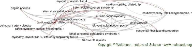 Diseases related to Cardiomyopathy, Dilated, 1m