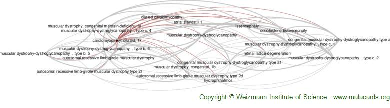 Diseases related to Cardiomyopathy, Dilated, 1x