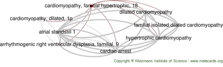 Diseases related to Cardiomyopathy, Familial Hypertrophic, 18