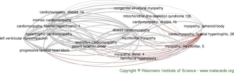 Diseases related to Cardiomyopathy, Familial Hypertrophic, 26