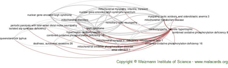 Diseases related to Cardiomyopathy, Infantile Hypertrophic