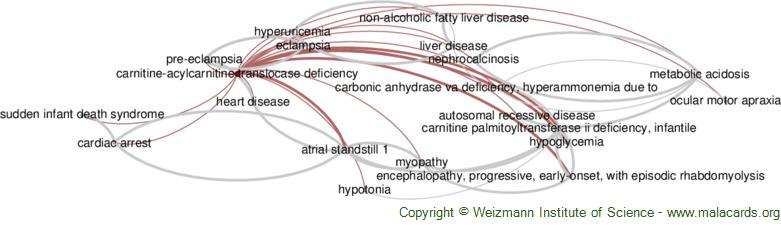 Diseases related to Carnitine-Acylcarnitine Translocase Deficiency