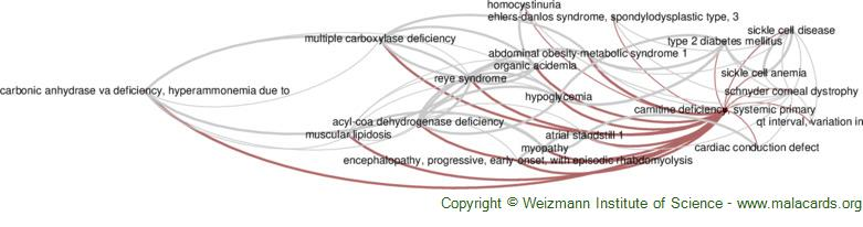 Diseases related to Carnitine Deficiency, Systemic Primary