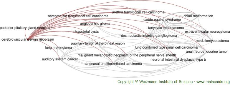 Diseases related to Cerebrovascular Benign Neoplasm