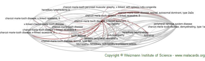 Diseases related to Charcot-Marie-Tooth Disease, X-Linked Dominant, 1