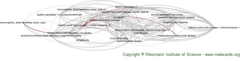 Diseases related to Charcot-Marie-Tooth Disease, X-Linked Recessive, 3