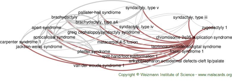 Diseases related to Chromosome 2q35 Duplication Syndrome