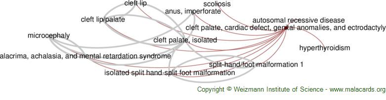 Diseases related to Cleft Palate, Cardiac Defect, Genital Anomalies, and Ectrodactyly