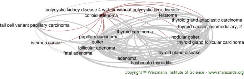 Diseases related to Colloid Adenoma