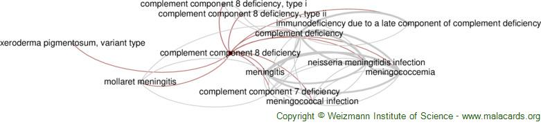 Diseases related to Complement Component 8 Deficiency