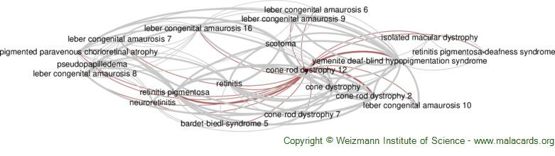 Diseases related to Cone-Rod Dystrophy 12