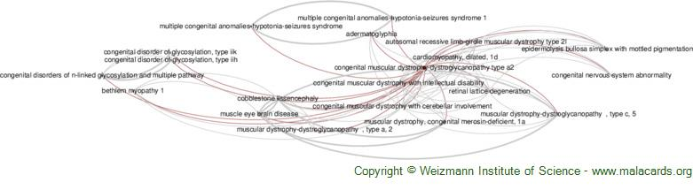 Diseases related to Congenital Muscular Dystrophy-Dystroglycanopathy Type A2