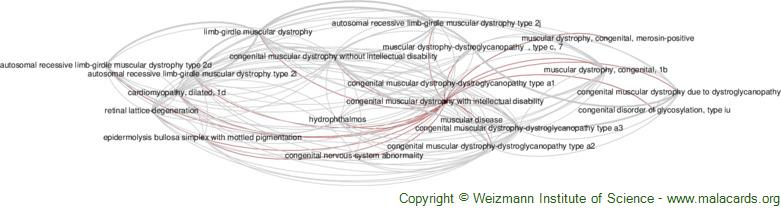 Diseases related to Congenital Muscular Dystrophy with Intellectual Disability