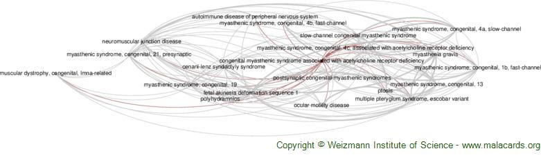Diseases related to Congenital Myasthenic Syndrome Associated with Acetylcholine Receptor Deficiency