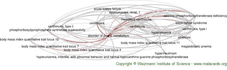 Diseases related to Disorder of Purine Metabolism