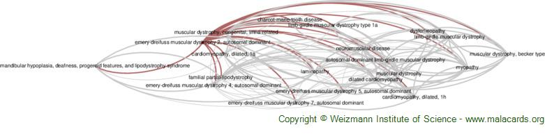 Diseases related to Emery-Dreifuss Muscular Dystrophy 2, Autosomal Dominant