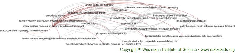 Diseases related to Emery-Dreifuss Muscular Dystrophy 5, Autosomal Dominant