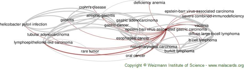 Diseases related to Epstein-Barr Virus-Associated Gastric Carcinoma
