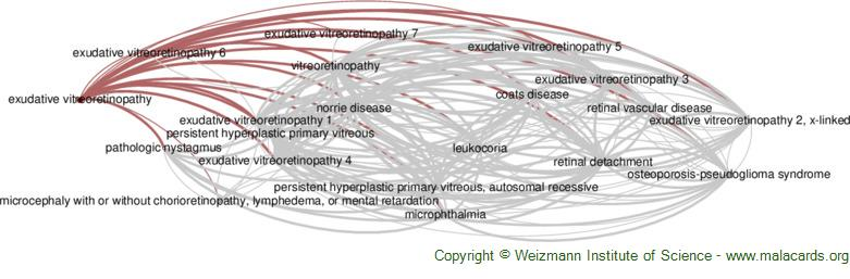 Diseases related to Exudative Vitreoretinopathy
