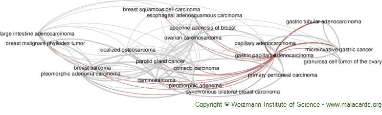 Diseases related to Gastric Papillary Adenocarcinoma