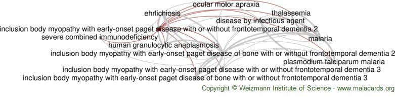 Diseases related to Inclusion Body Myopathy with Early-Onset Paget Disease with or Without Frontotemporal Dementia 2