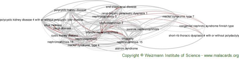 Diseases related to Infantile Nephronophthisis