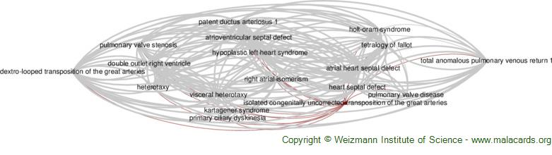 Diseases related to Isolated Congenitally Uncorrected Transposition of the Great Arteries