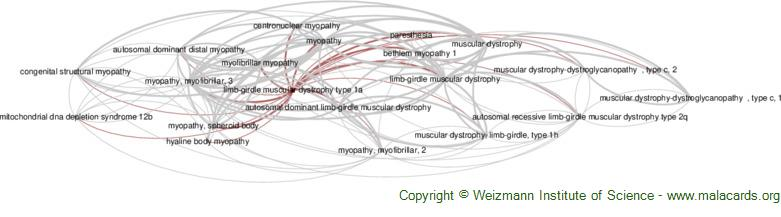 Diseases related to Limb-Girdle Muscular Dystrophy Type 1a