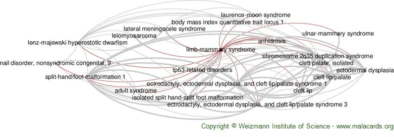 Diseases related to Limb-Mammary Syndrome