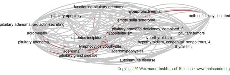 Diseases related to Lymphocytic Hypophysitis
