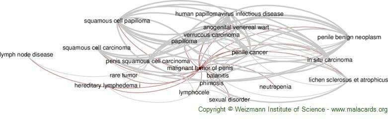 Diseases related to Malignant Tumor of Penis
