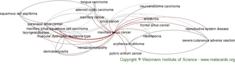 Diseases related to Maxillary Sinus Cancer