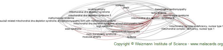 Diseases related to Mitochondrial Dna Depletion Syndrome 9